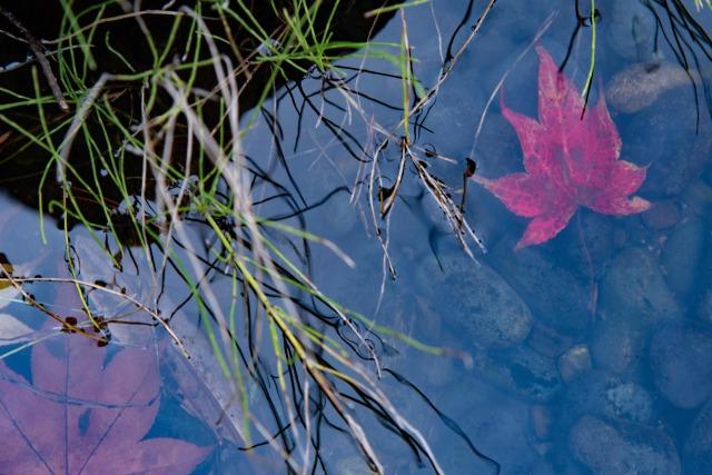 平岡樹芸センターの風景と撮影ポイント