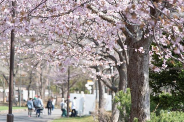 中島公園の春の風景