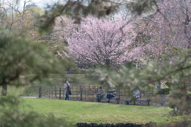 中島公園の桜と紅葉、3つの見どころのご紹介でした