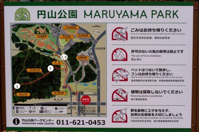 円山公園でリスと出会えたスポット