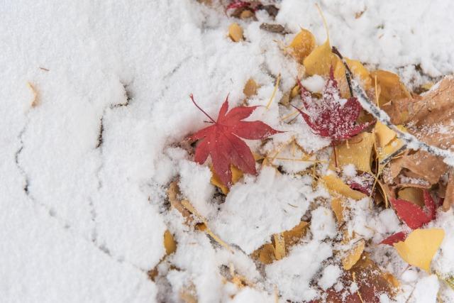 中島公園の、秋と冬の紅葉