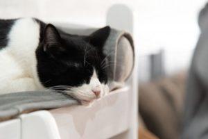 三分割法で撮った猫