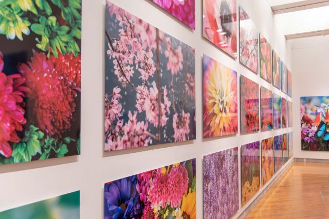 蜷川実花展 ―虚構と現実の間に―@札幌芸術の森