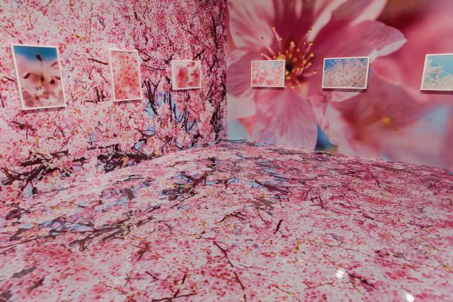 【写真アリ】蜷川実花展 ―虚構と現実の間に―@札幌芸術の森に行ってきた。