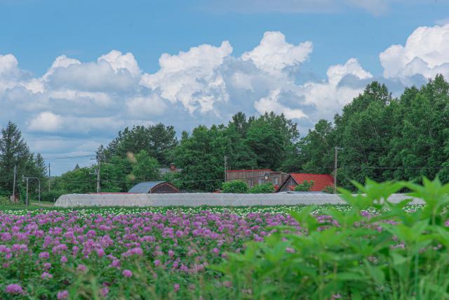 札幌に移住して暮らす中で見た北海道の景色