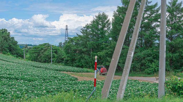 【ジブリのような風景】レンタサイクルで周る、夏の美瑛の撮影スポット。