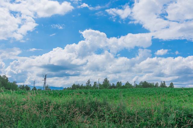 北海道には梅雨もない