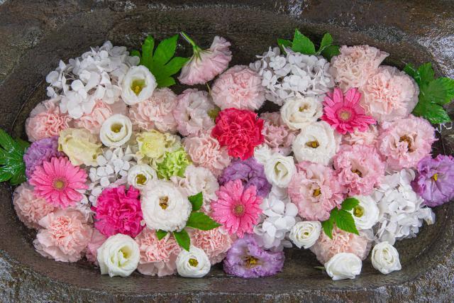 【札幌・手稲神社】花手水のある風景と御朱印・おみくじ情報を紹介。