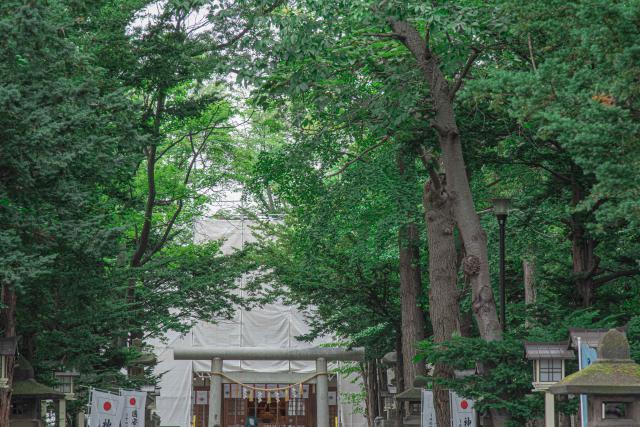 新琴似神社の花手水