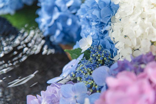 札幌の花手水めぐり、毎年やってほしい。